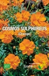 COSMOS SULPHUREUS ( Orange ) - BIO