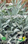 SAUGE OFFICINALE - BIO